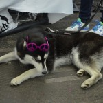 #dogsforpeace